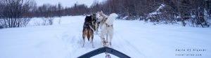 摩爾曼斯克murmansk狗拉雪橇