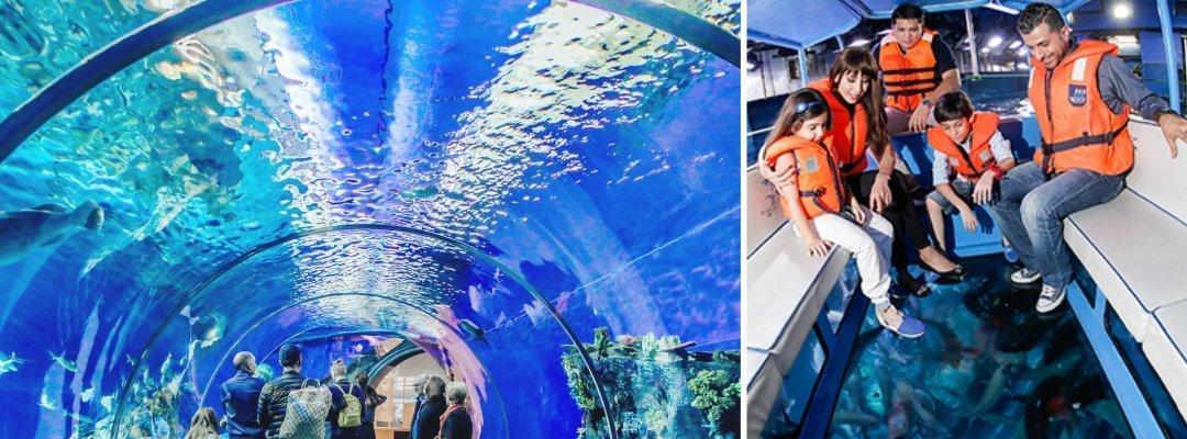 杜拜水族館和水下動物園