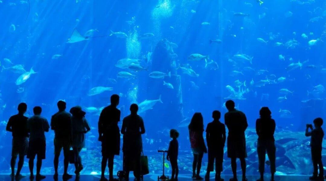 棕櫚島亞特蘭提斯水族館Aquaventure