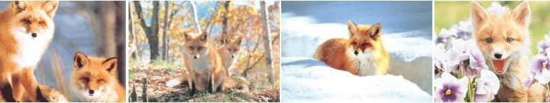 北見狐狸牧場