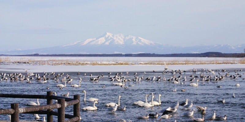 網走濤沸湖 白鳥公園