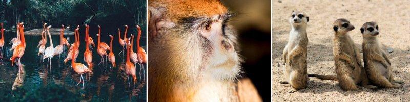 巴塞隆納動物園