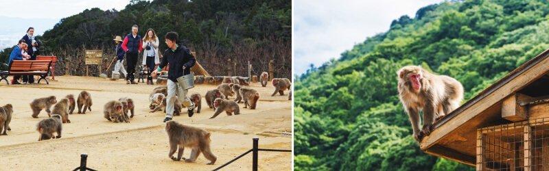 京都景點嵐山猴子公園